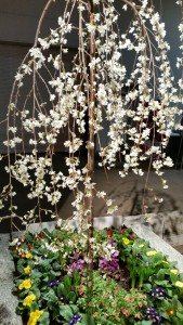 Bost Flower Show tree & flowers  20150312_164616